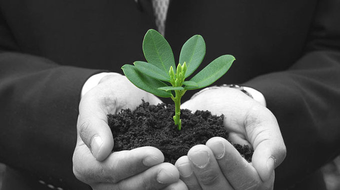 Embracing sustainability for business growth